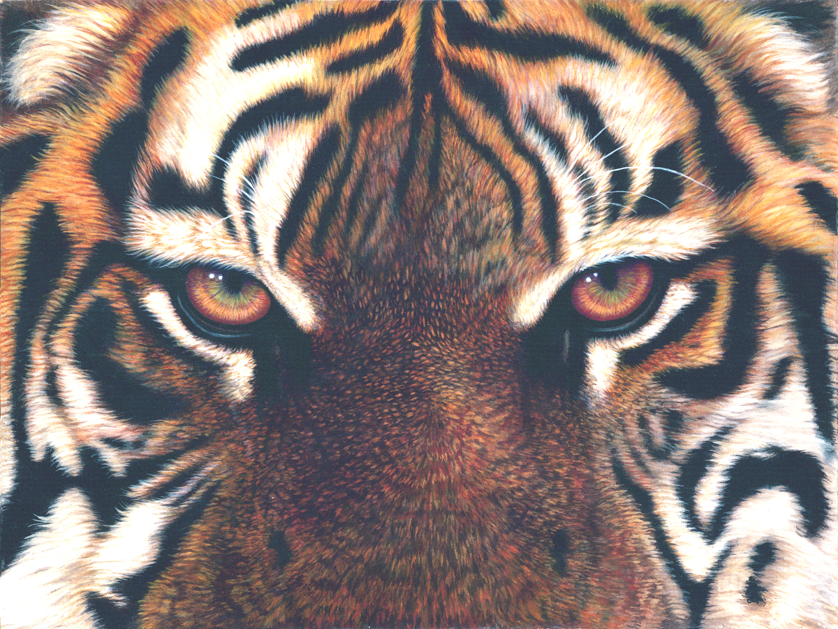Eyes of the Tiger- Artist Jacquie Vaux