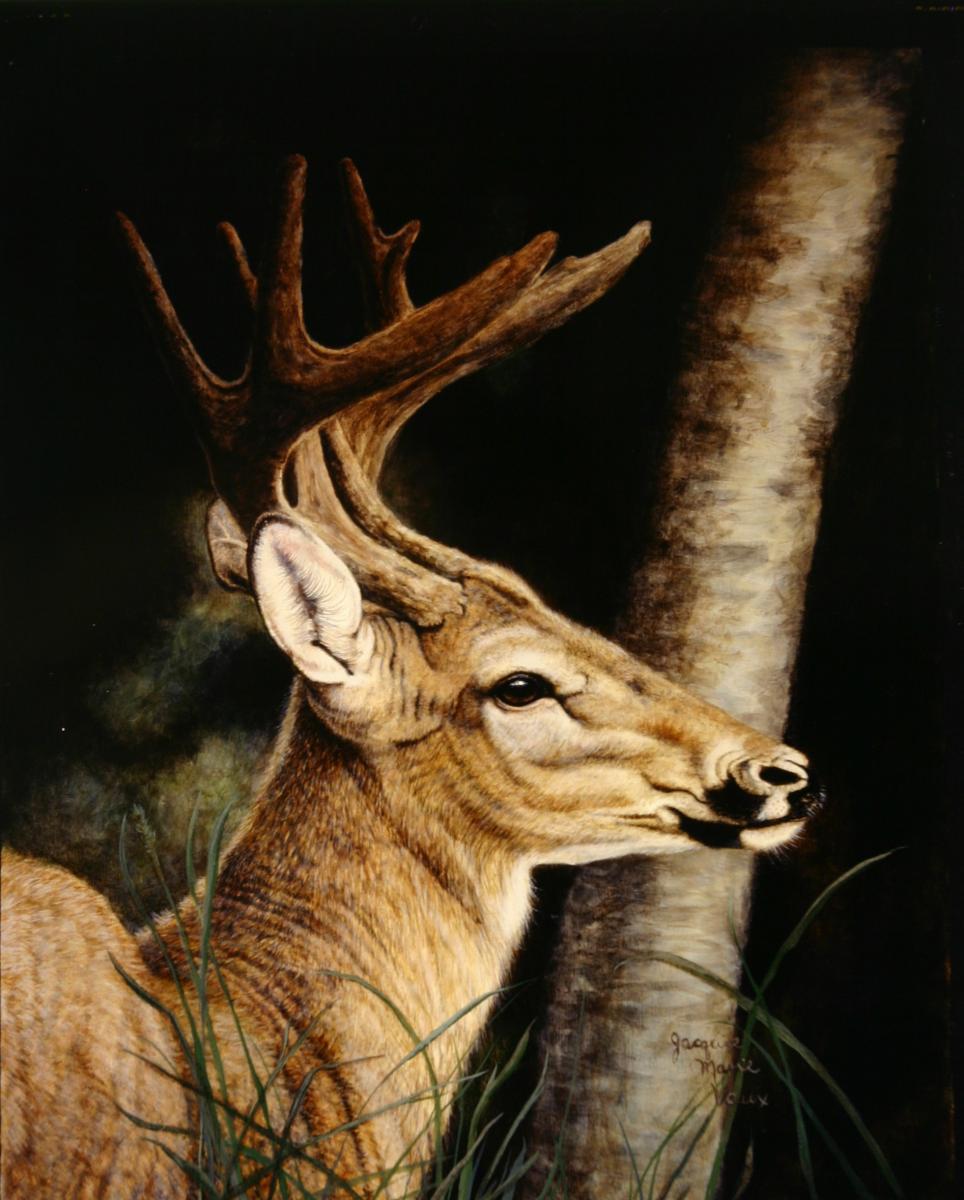 Deer Painting  Artist Jacquie Vaux