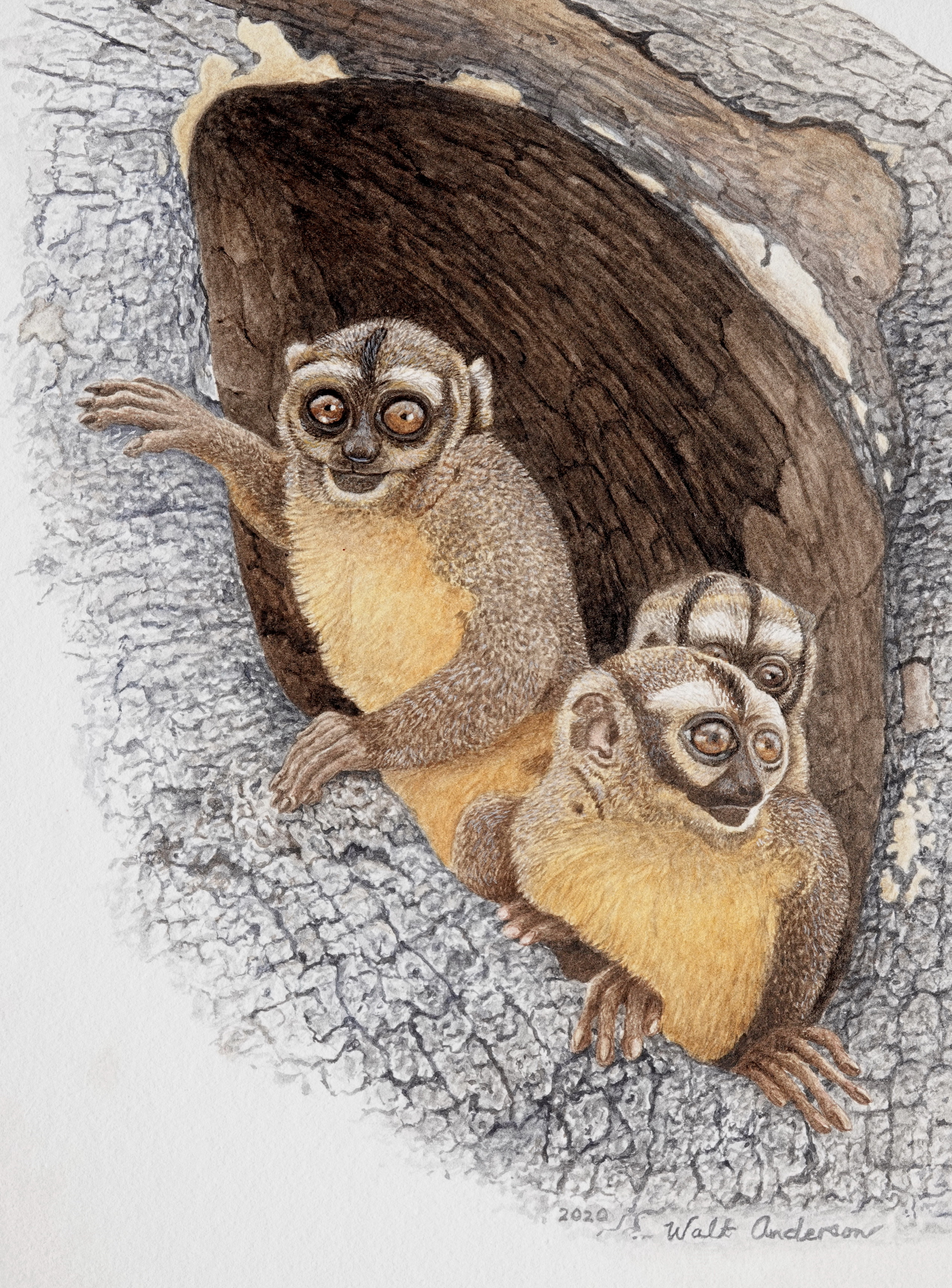 Coming-out Party: Owl Monkeys   Wallhanging by Walt Anderson   Artists for Conservation 2020