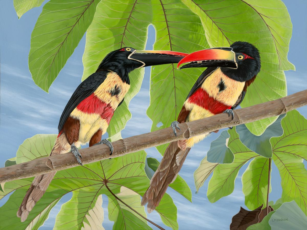 Fiery-billed Aracaris   Wallhanging by Lynn Erikson   Artists for Conservation 2018