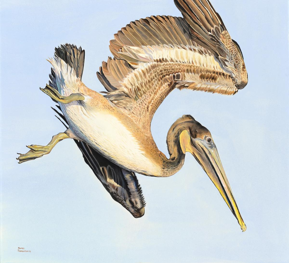 Brown Pelican in Flight | Wallhanging by James Fiorentino | Artists for Conservation 2018
