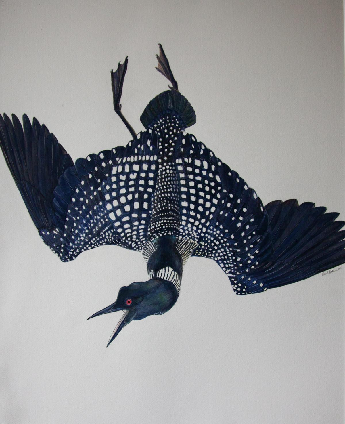 Loon on the Wing   Wallhanging by Rob Butler   Artists for Conservation 2018