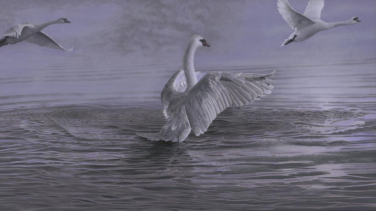 Aurora's Lavender, Mute Swans   Wallhanging by Roy Carretta   Artists for Conservation 2018