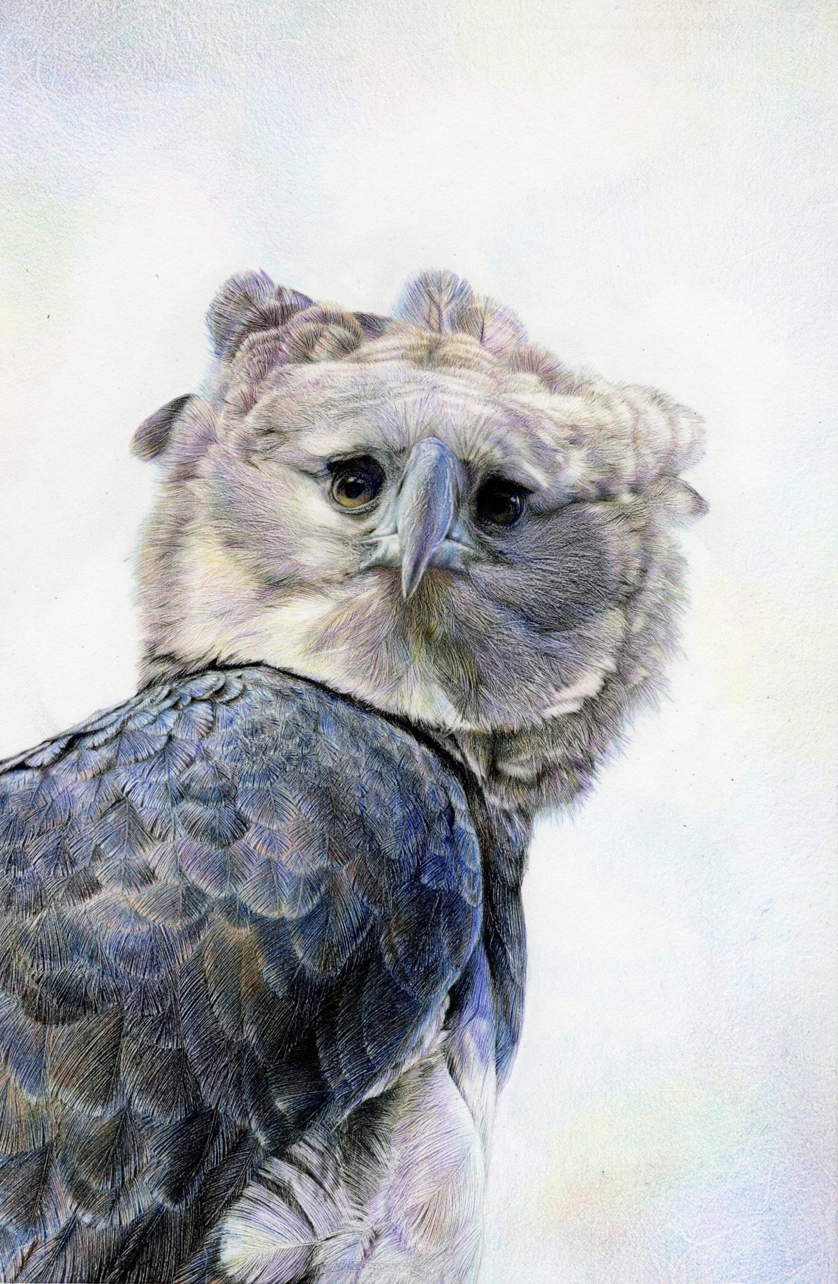 Harpy - Spirit of the Wind | Wallhanging by Nick Day | Artists for Conservation 2020