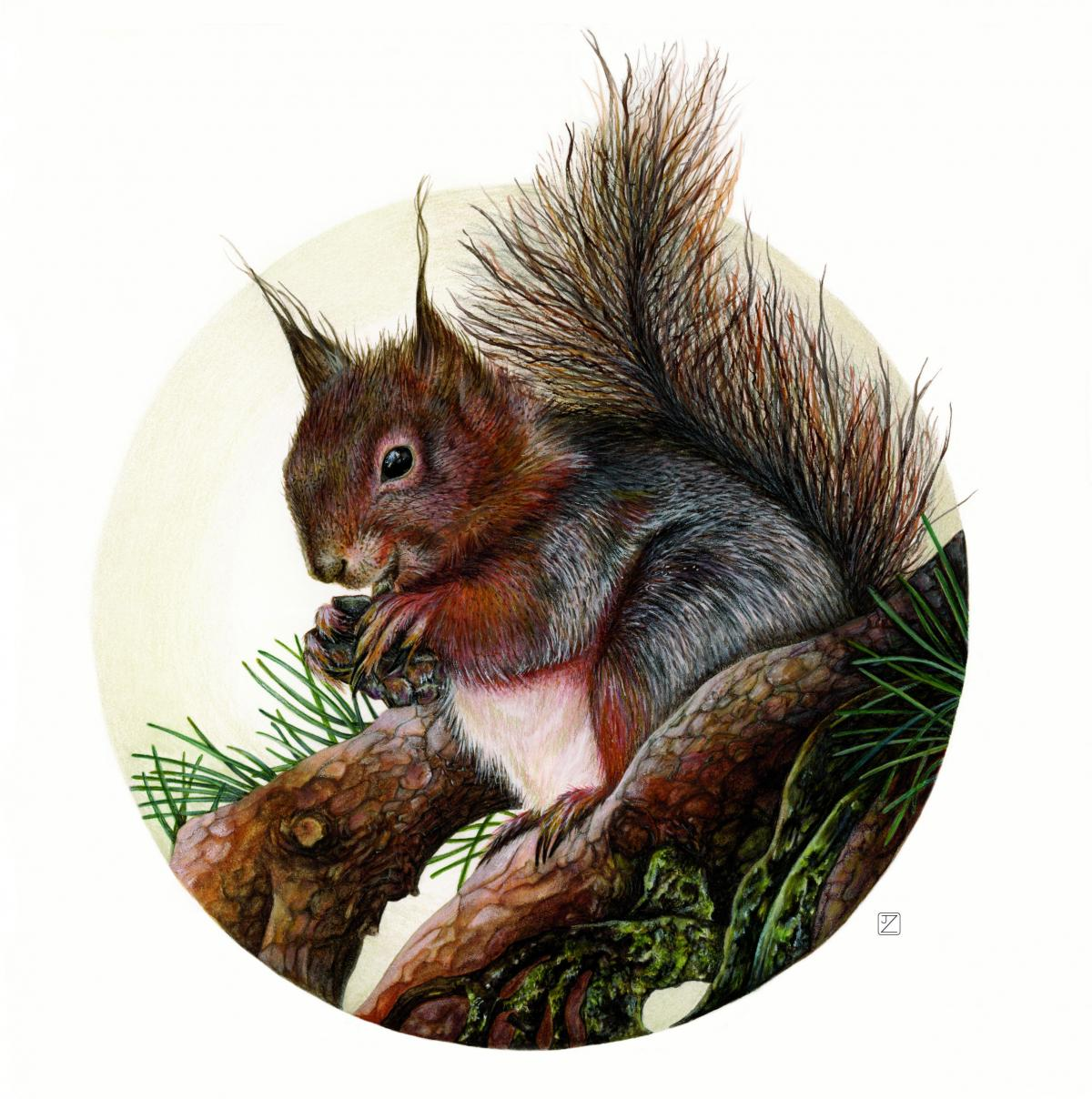 Eurasian Red Squirrel | Wallhanging by Jane Zimmermann | Artists for Conservation 2020