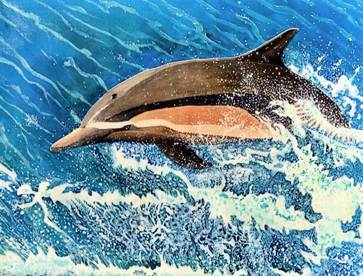 Common Dolphin Dana Point | Wallhanging by Doug Hiser | Artists for Conservation 2020