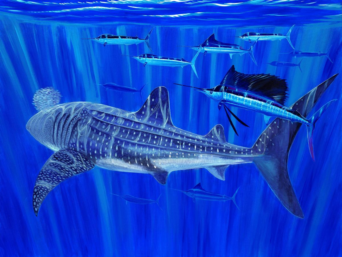 Giants and Sails   Wallhanging by Guy Harvey   Artists for Conservation 2020
