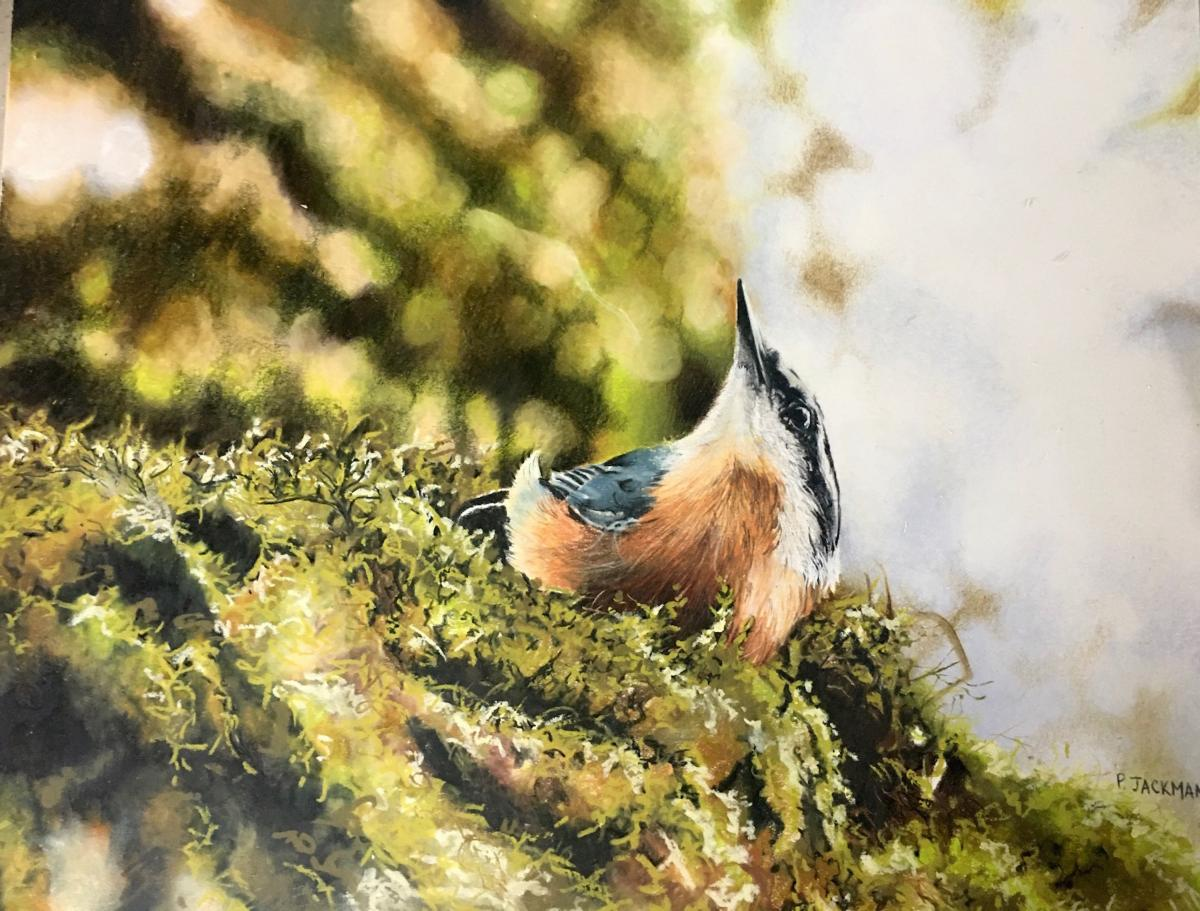 Nuthatch | Wallhanging by Pat Jackman | Artists for Conservation 2021