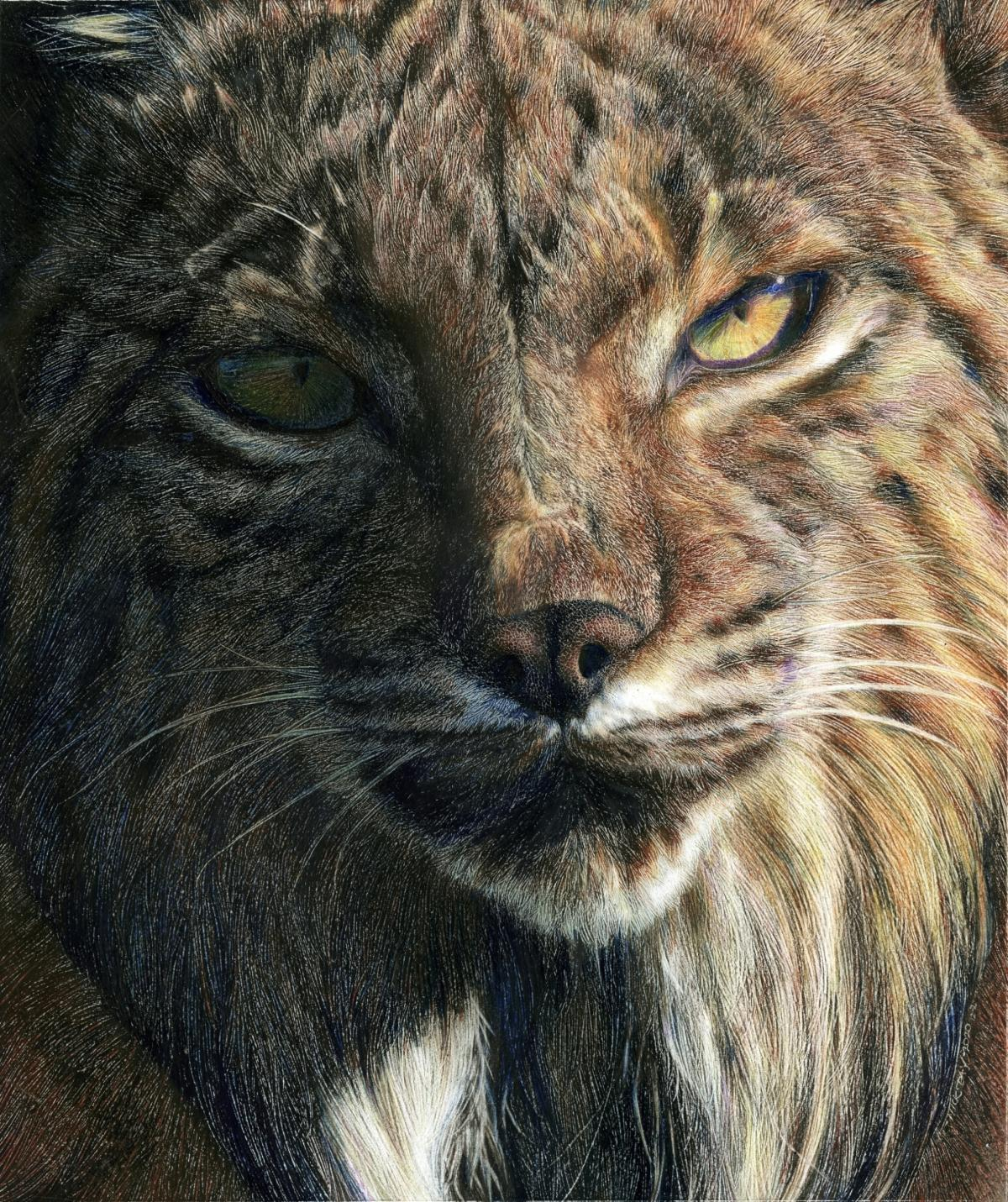 Iberian Lynx | Wallhanging by Nick Day | Artists for Conservation 2021