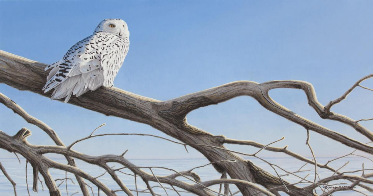 Snowy Owl   Wallhanging by Joseph Koensgen   Artists for Conservation 2021