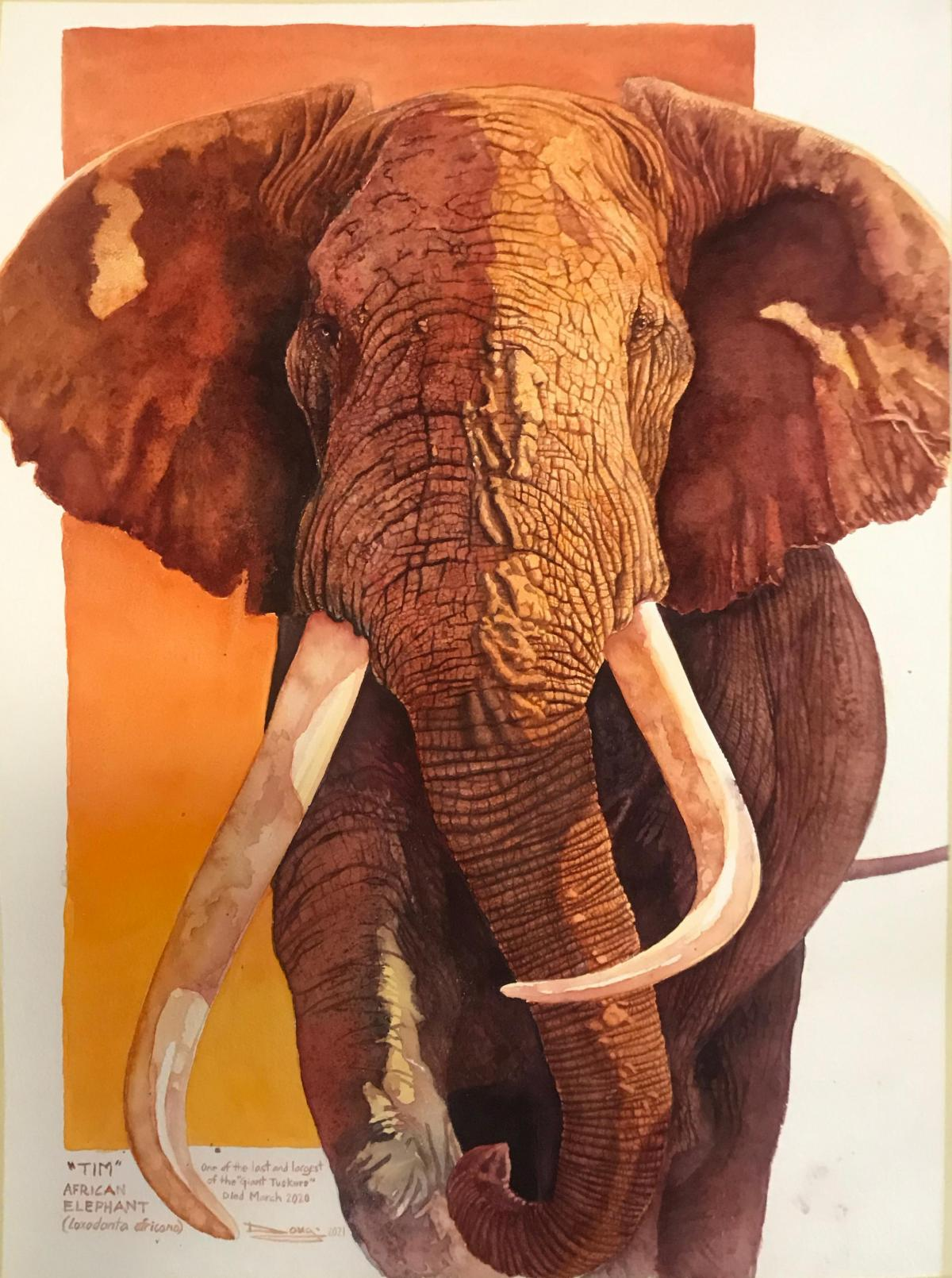 Tim, One of the Last and Largest Giant Tuskers   Wallhanging by Douglass Lockyer   Artists for Conservation 2021