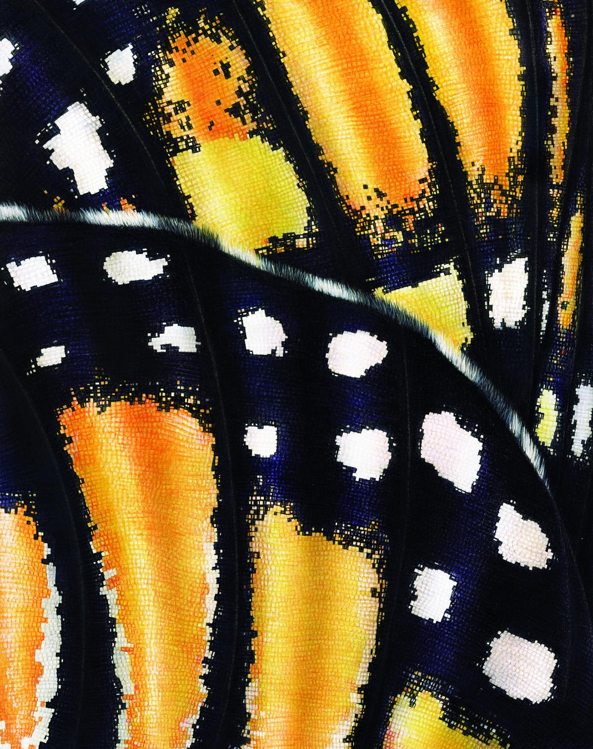 Monarch Butterfly Wings | Wallhanging by Jane Zimmermann | Artists for Conservation 2021
