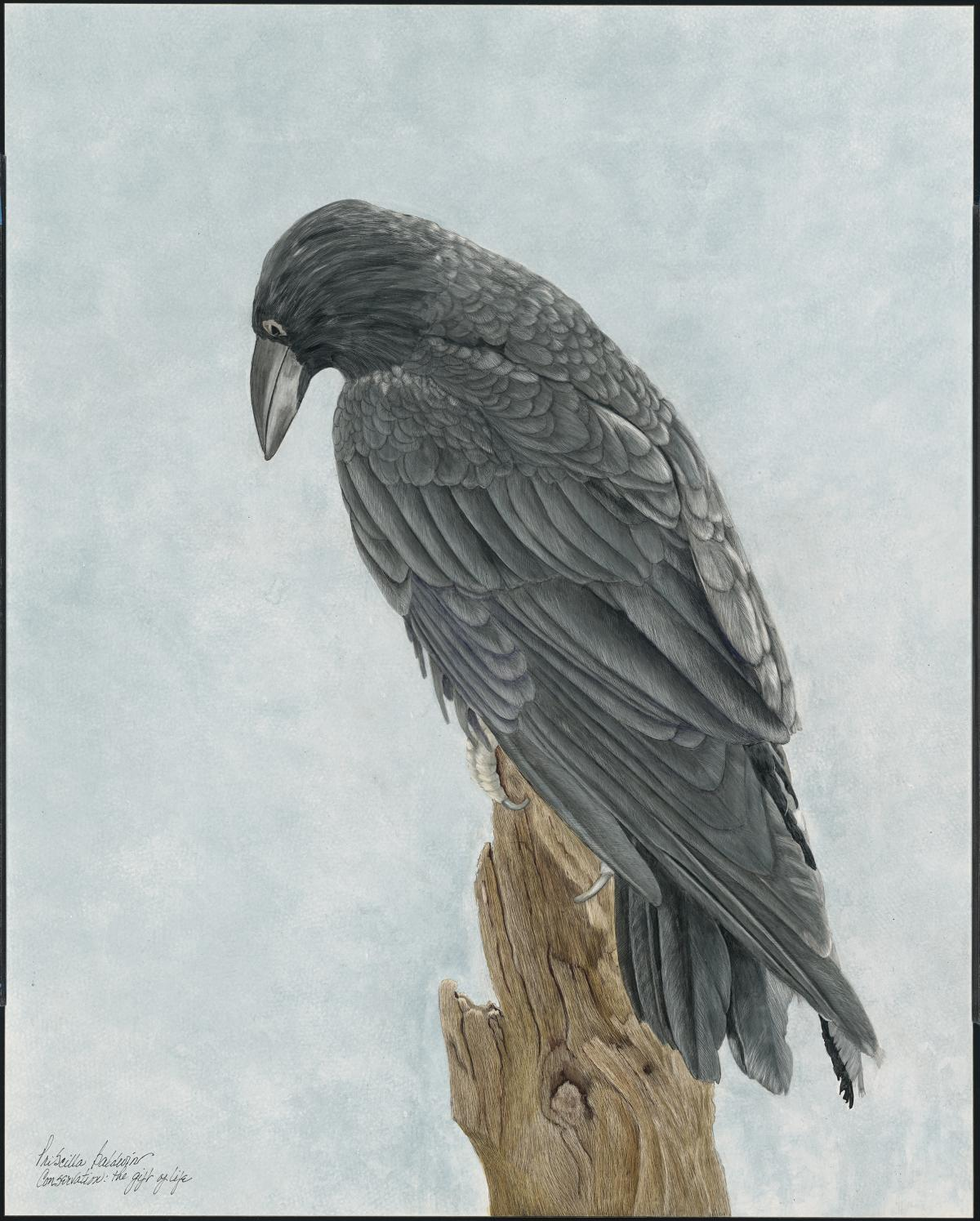 Cihuahuan Raven | Wallhanging by Priscilla Baldwin | Artists for Conservation 2021