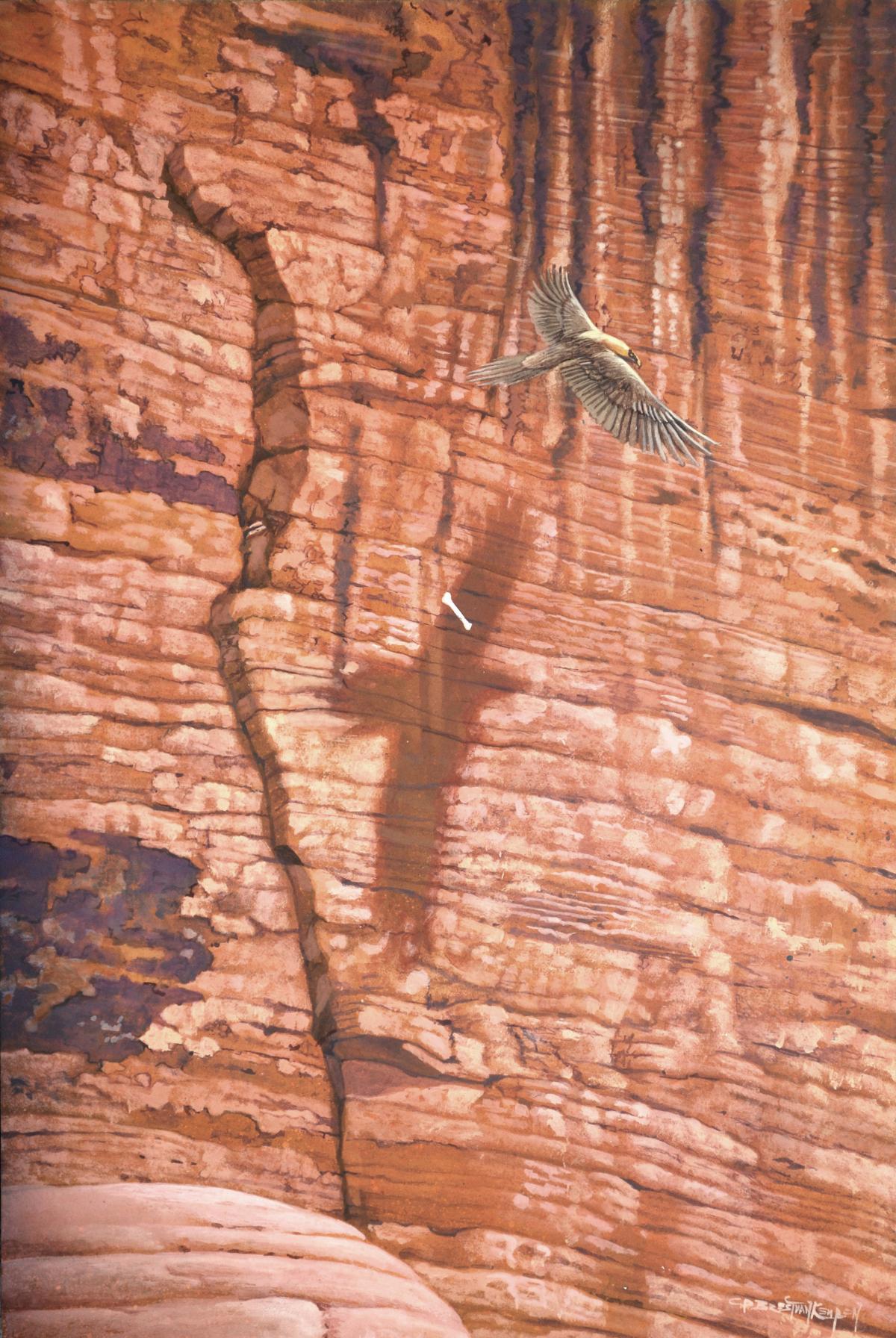 Ossifrage   Wallhanging by Carel Brest van Kempen   Artists for Conservation 2021
