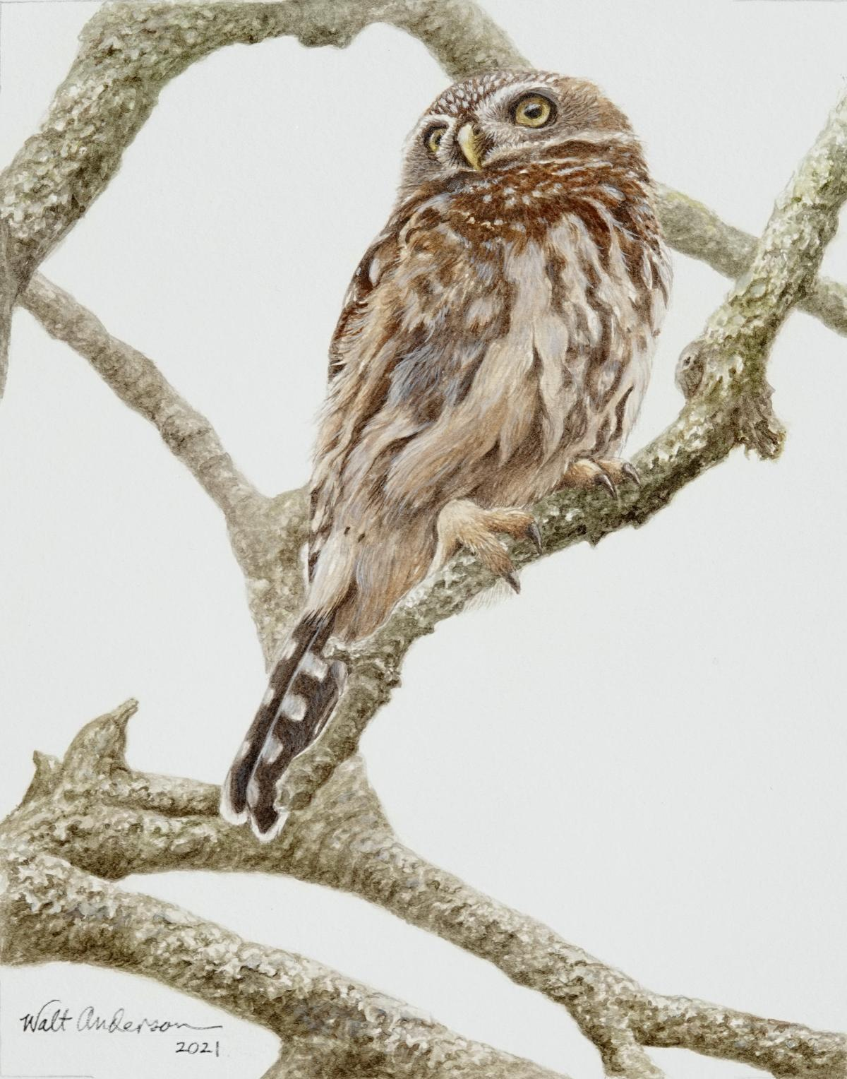 Pint-sized Predator: Pearl-spotted Owlet | Wallhanging by Walt Anderson | Artists for Conservation 2021