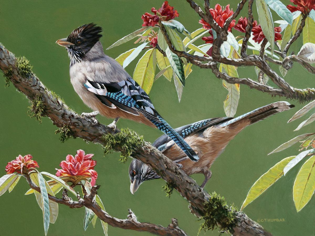 Black-headed Jay | Wallhanging by Chirag Thumbar | Artists for Conservation 2021