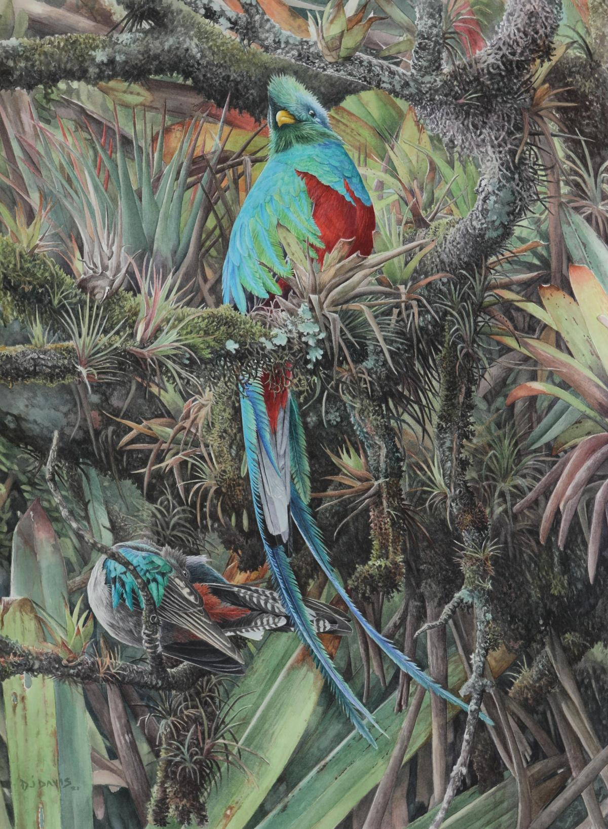 Pareja Chapin | Wallhanging by Daniel Davis | Artists for Conservation 2021