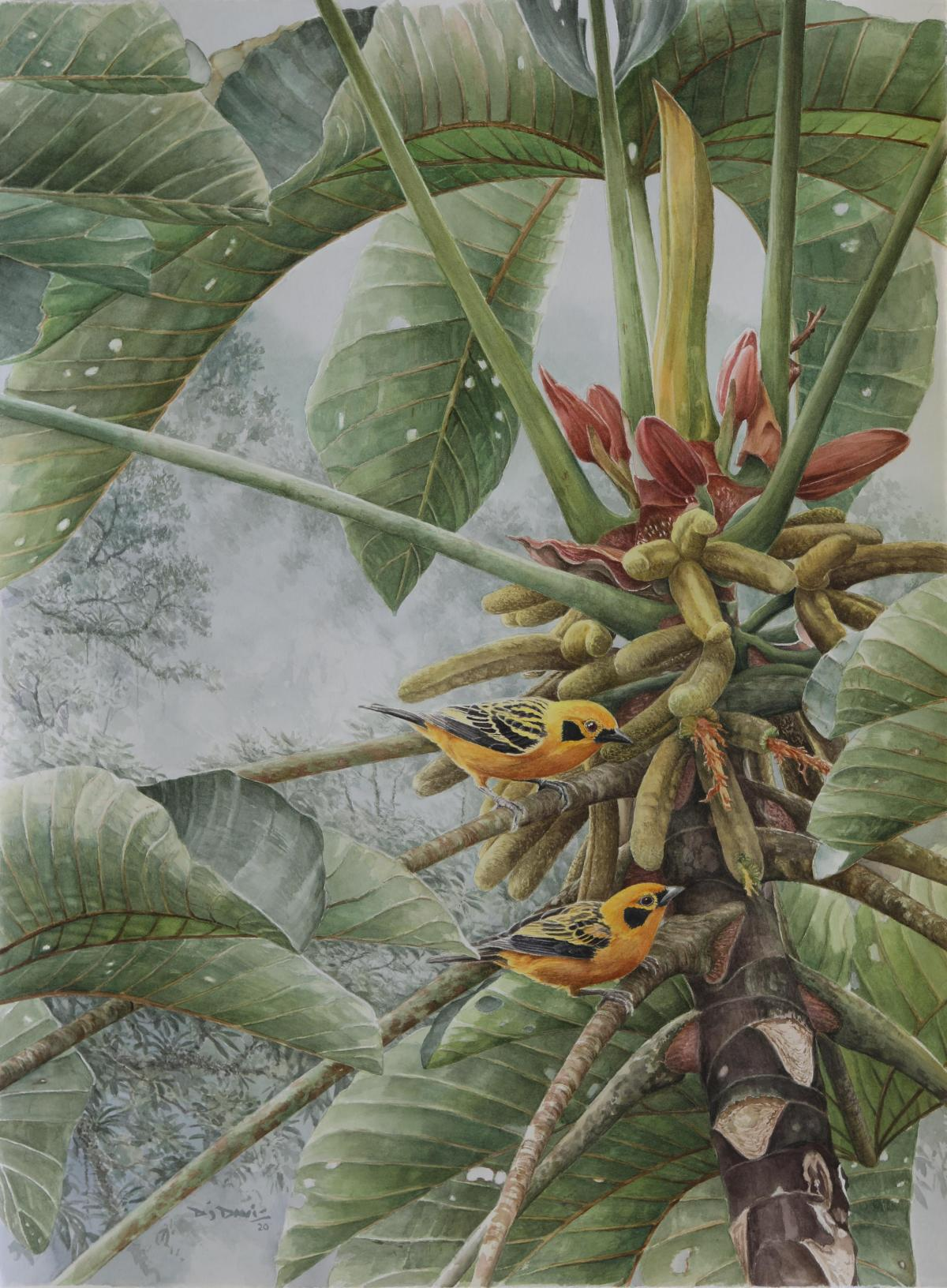 Golden Tanagers   Wallhanging by Daniel Davis   Artists for Conservation 2021