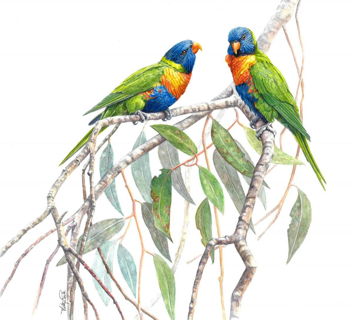 Rainbow Lorikeets | Wallhanging by Vicky Earle | Artists for Conservation 2021