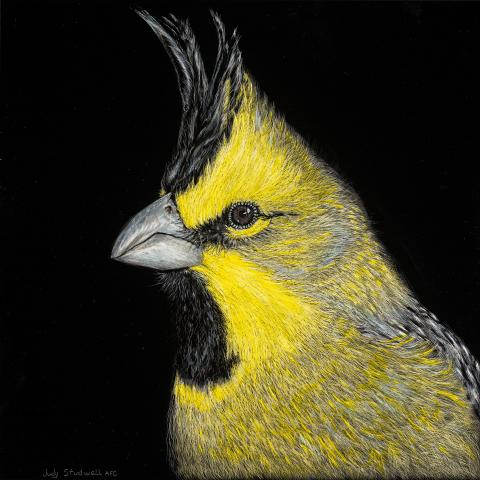 Yellow Cardinal by AFC
