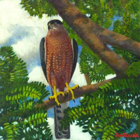 Gundlach's Hawk by AFC