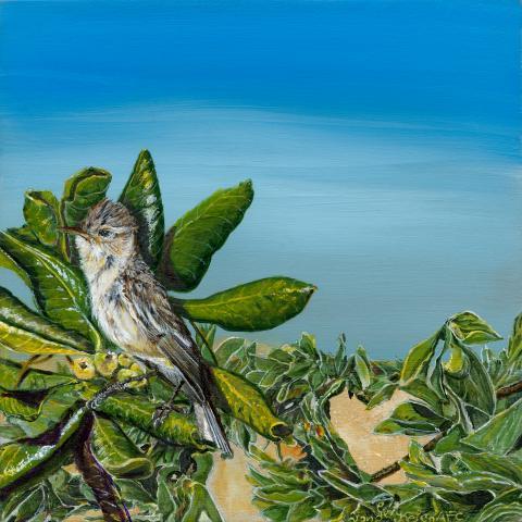Kiritimati Reed-warbler, Bokikokiko by AFC