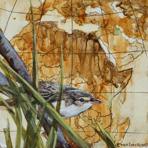 Basra Reed-warbler, Basra Reed-Warbler, Basra Reed Warbler by AFC