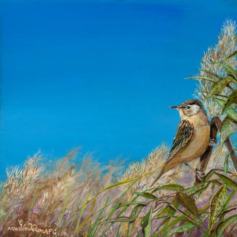 Streaked Reed-warbler, Speckled Reed Warbler, Streaked Reed-Warbler by AFC