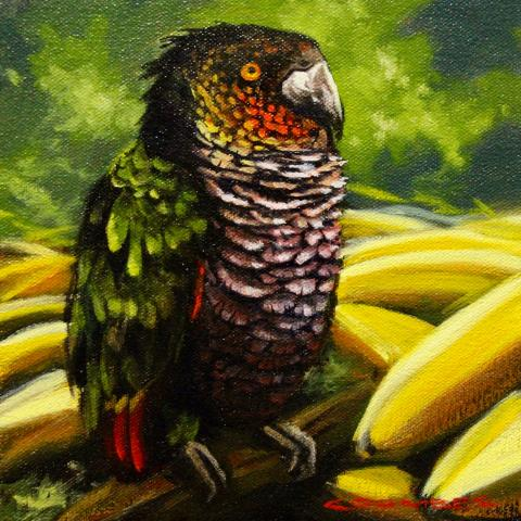 Imperial Amazon, Imperial Parrot by AFC