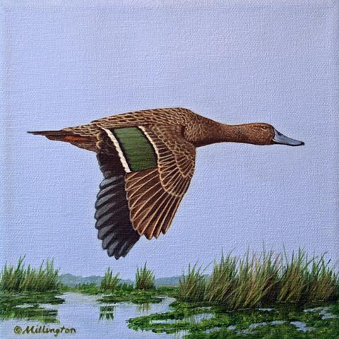 Meller's Duck by AFC