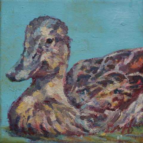 Hawaiian Duck by AFC