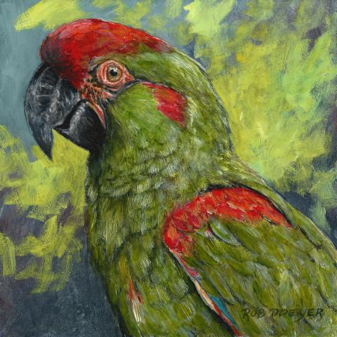 Red-fronted Macaw by AFC
