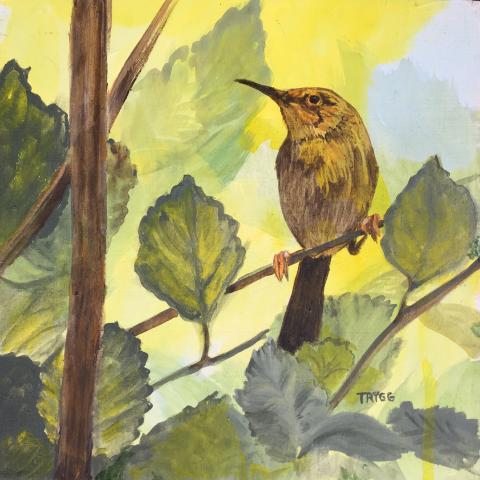Long-billed Forest-warbler, Long-billed Tailorbird by AFC