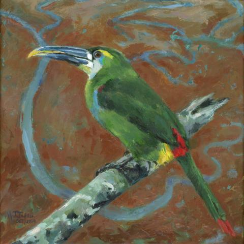 Yellow-browed Toucanet by AFC