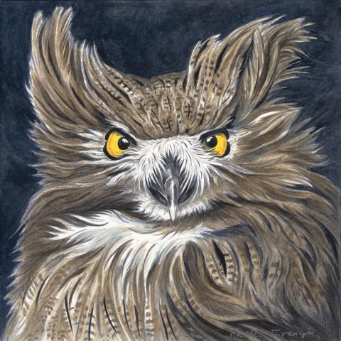 Blakiston's Eagle-owl, Blakiston's Fish-Owl by AFC