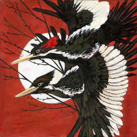 Ivory-billed Woodpecker by AFC