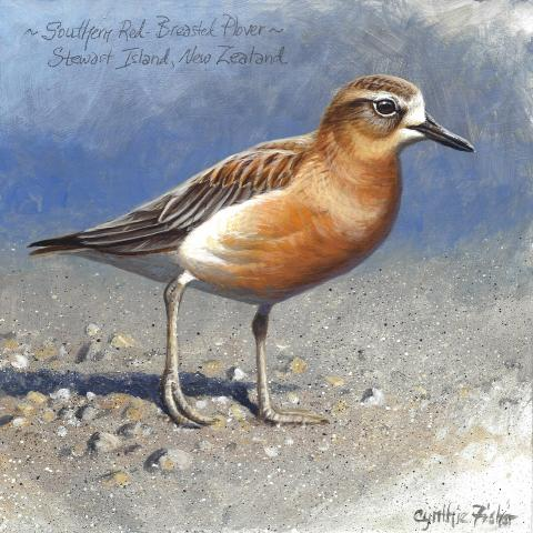 Southern Red-breasted Plover by AFC