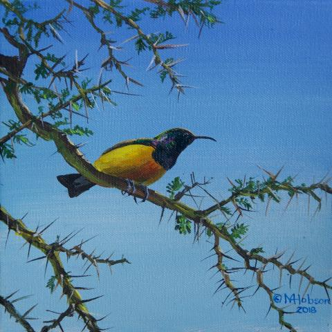 Loveridge's Sunbird by AFC