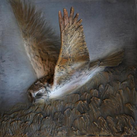 Madagascar Marsh-harrier by AFC