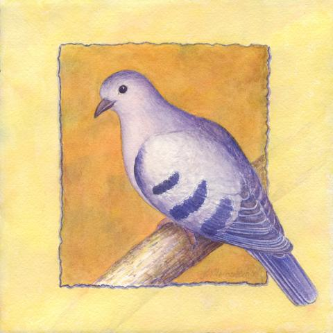 Purple-winged Ground-dove, Purple-winged Ground Dove, Purple-barred Ground-dove, Purple-winged Ground-Dove by AFC