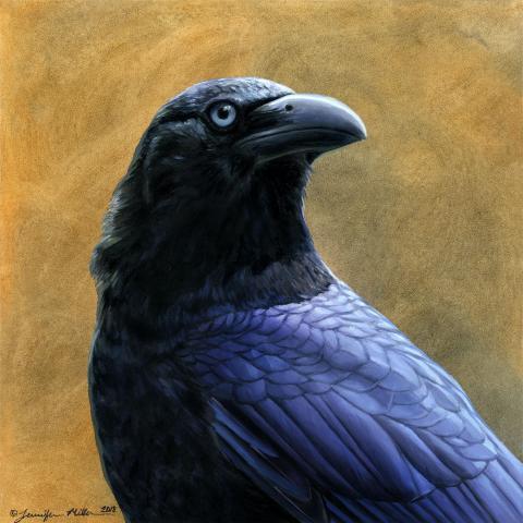 Banggai Crow by AFC