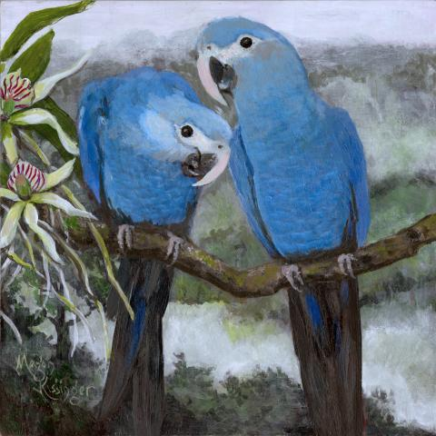 Spix's Macaw, Little Blue Macaw by AFC