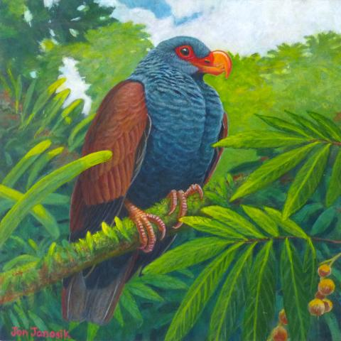 Tooth-billed Pigeon by AFC