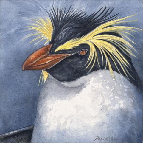 Northern Rockhopper Penguin by AFC