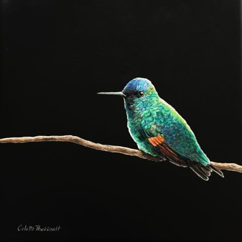 Oaxaca Hummingbird, Oaxaca Hummingbird by AFC