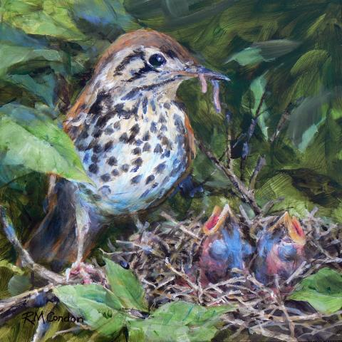 Spotted Ground-thrush, Spotted Ground Thrush, Natal Thrush, Spotted Forest Thrush, Spotted Ground-Thrush by AFC
