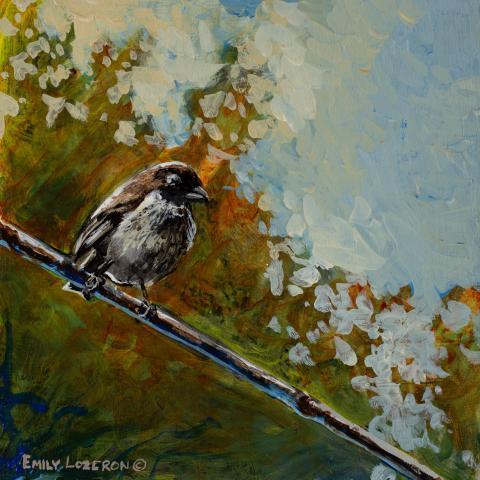 Medium Tree-finch by AFC