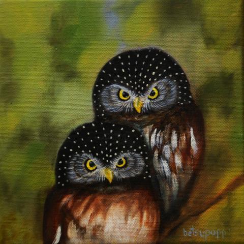 Pernambuco Pygmy-owl, Pernambuco Pygmy Owl, Pernambuco Pygmy-Owl by AFC