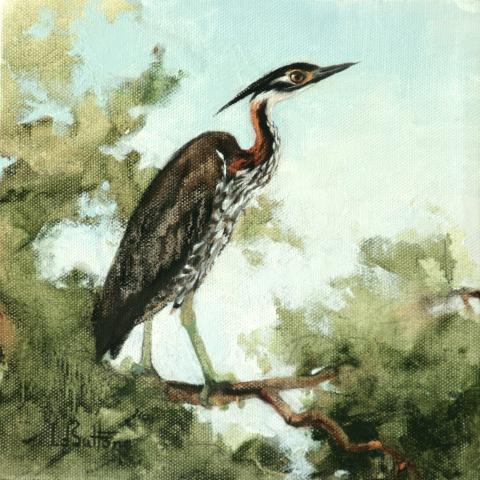 White-eared Night-heron, White-eared Night Heron, White-eared Night-Heron by AFC