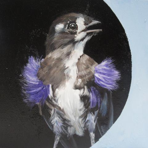 Buff-throated Purpletuft by AFC